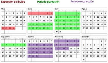 Calendario de cultivo del azafrán (fuente)